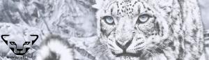 dynafit leopardo de las nieves slider 300x86 Códigos Descuento Diciembre 2015