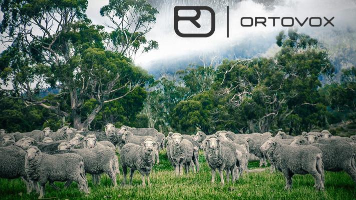 ropa termica ortovox lana merino Ropa térmica Ortovox